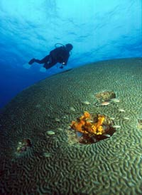 FREE Scuba Diving Offer Tobago Caribbean